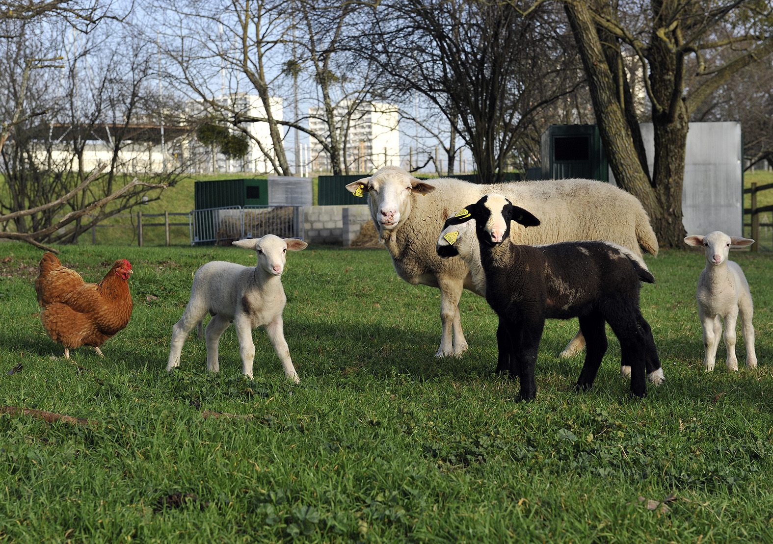 Du coq à l'âne – Où voir des animaux à Bordeaux ?