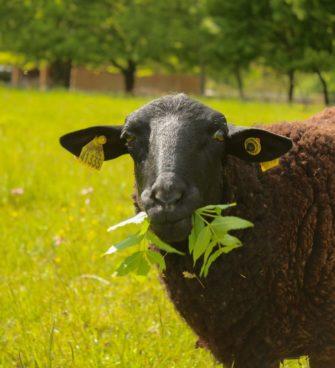 ferme chèvre fromage Villenave d'Ornon