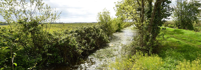 Marais de Montferrand