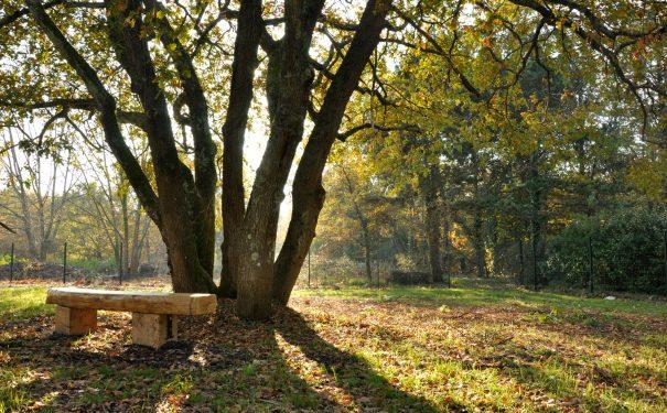 Les arbres de la métropole bordelaise