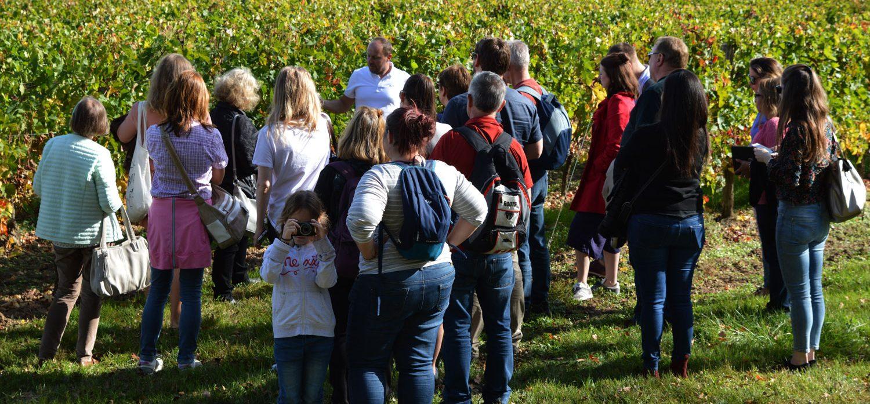 découverte vignoble Bordeaux avec enfants