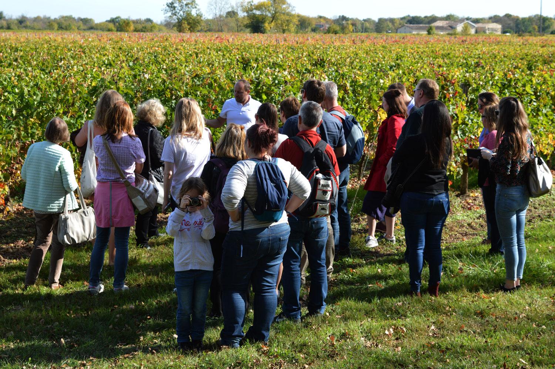 3 idées pour découvrir le vignoble avec les enfants