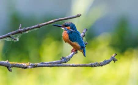Balade découverte oiseaux Bruges