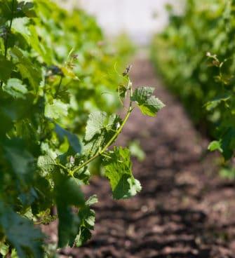 Route du vin Bordeaux