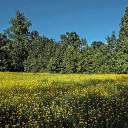 Le domaine de la Burthe à Floirac
