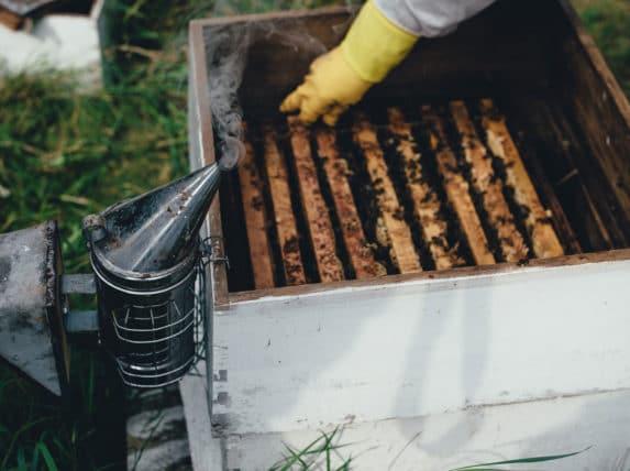 apiculture à Bordeaux