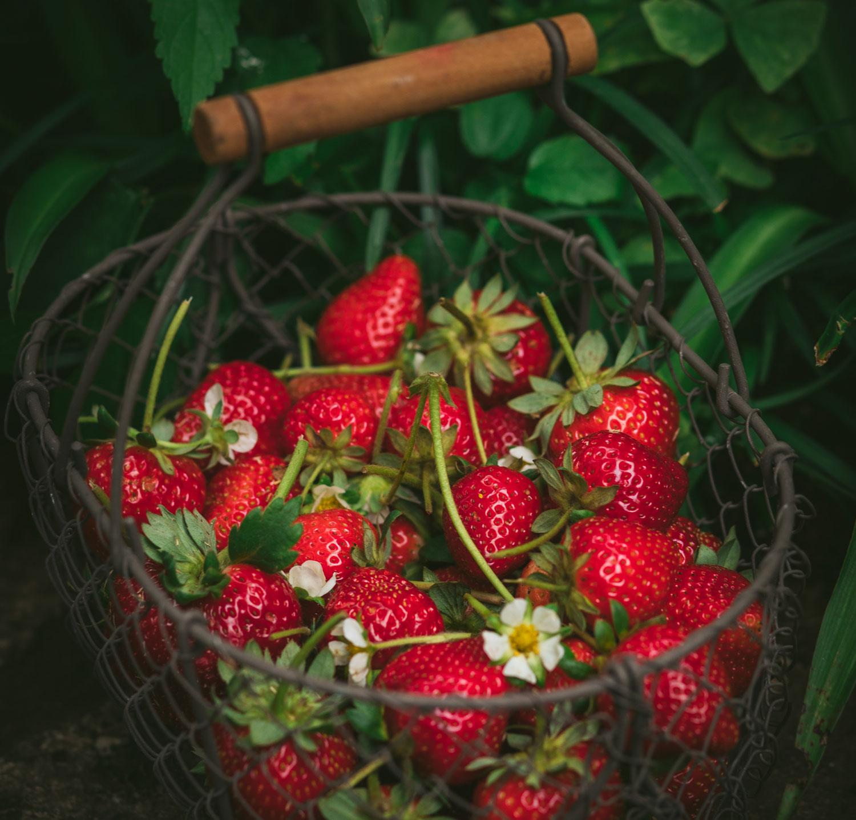 Jardiner (sans jardin) à Bordeaux Métropole