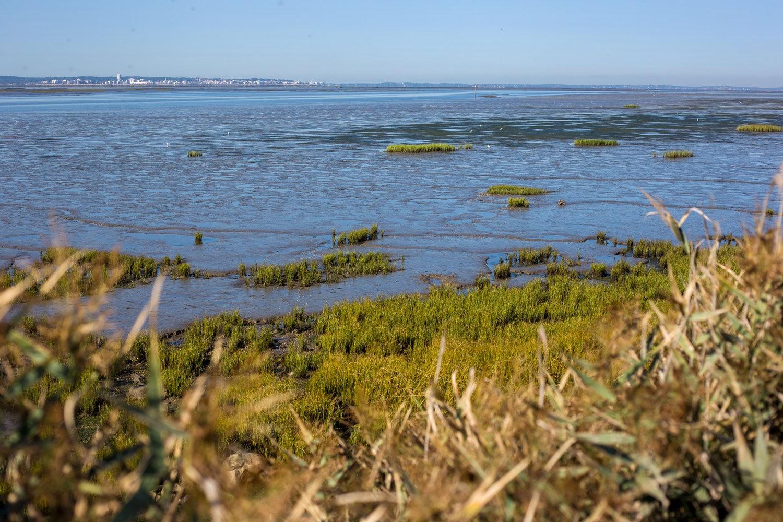 Immersion nature au cœur du Bassin d'Arcachon