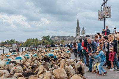 Transhumance urbaine 2018 dans le centre de Bordeaux