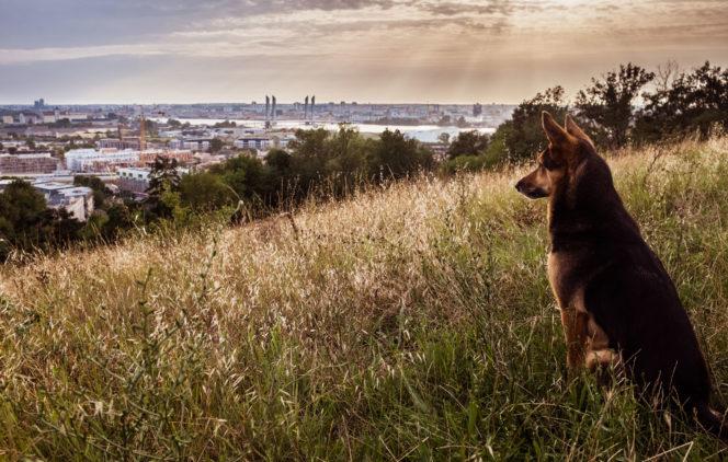 Chien observant Bordeaux et ses alentours