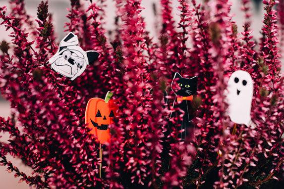 Fêter Halloween à Bordeaux