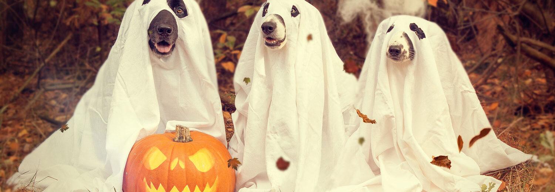 Les chiens aussi fêtent Halloween à Bordeaux