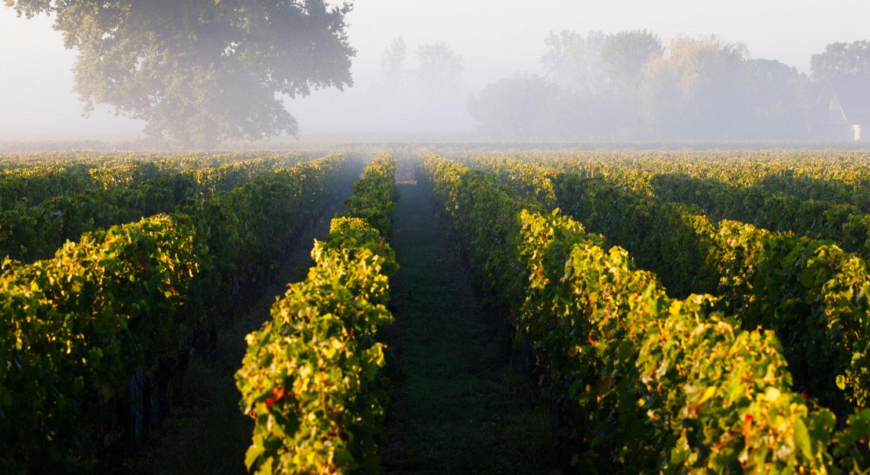 Rando à Bordeaux : les vignes à portée de tram