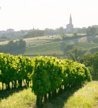 Vignoble Graves et Sauterne