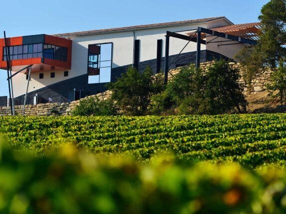 confinement bordeaux activités culturelles autour de la vigne chateau vin