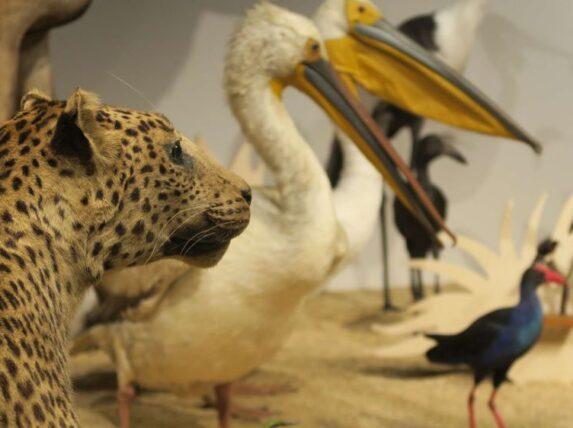 idées confinée expo afrique sauvage