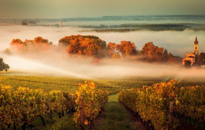 week-end vignes et découvertes sonores près Bordeaux