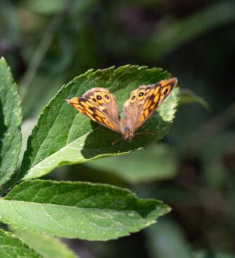 balade nature découverte Bordeaux parc des Jalles