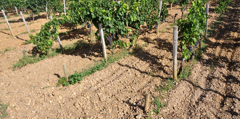 La vigne et l'architecte : un régal de Mérignac à Pessac